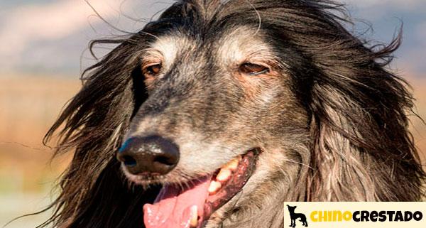 pelo cuidado perros