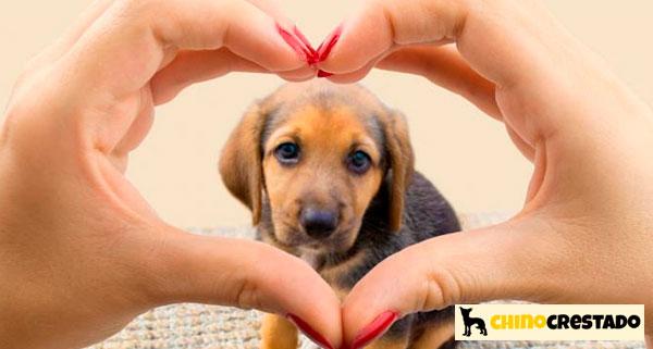 salud cuidados perros