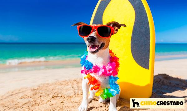 perros en la playa