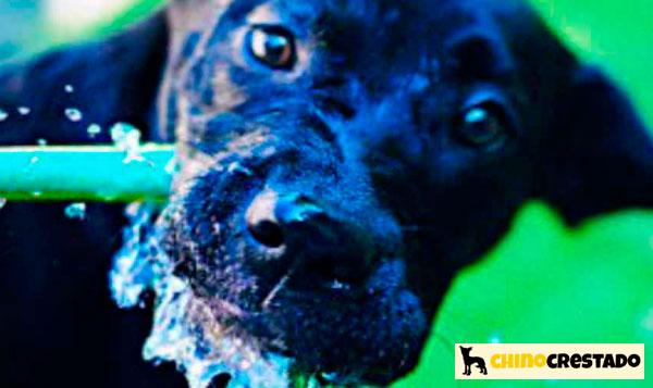 proteger perros del calor