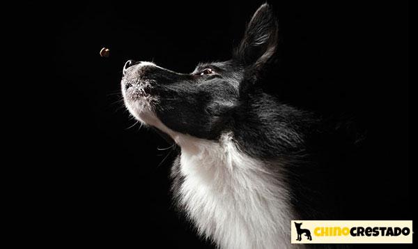 vision nocturna perros