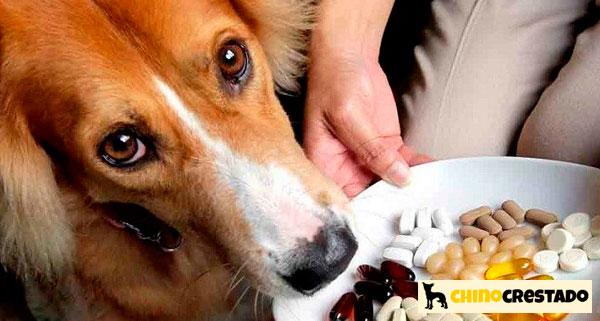 vitaminas suplementos perros